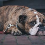 How to Build Relationships with Patients: Lessons from bulldog lawyers, prostitutes, and even patients!